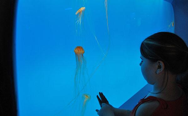 vyistavka-meduz-v-kitae