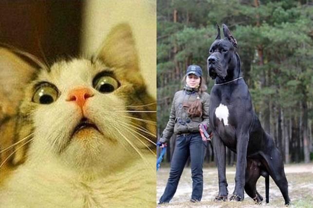 Невероятные двойники животных, людей, игрушек и др