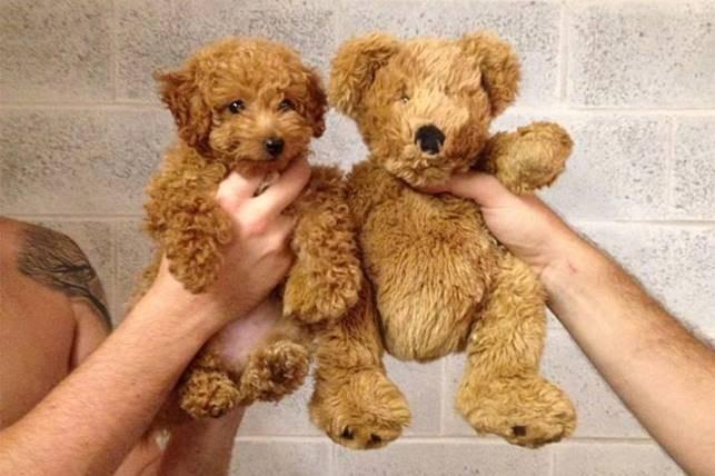 Щенок и медвежонок Тедди