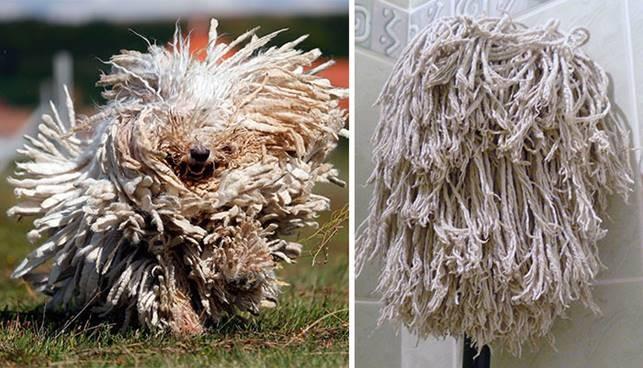 Собака-швабра