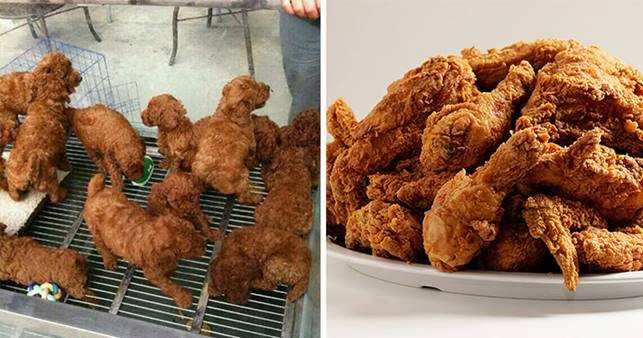 Щенки, похожие на кусочки жареной курицы