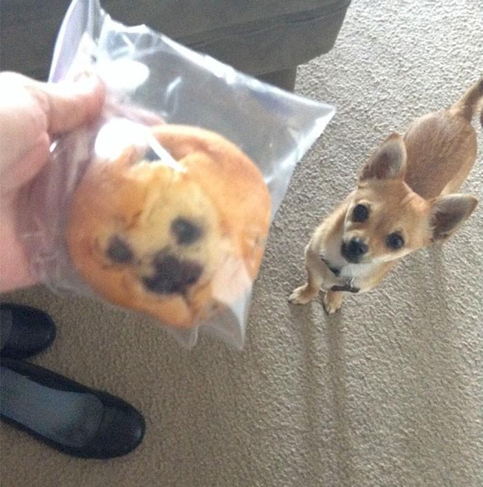 Собака-печенье