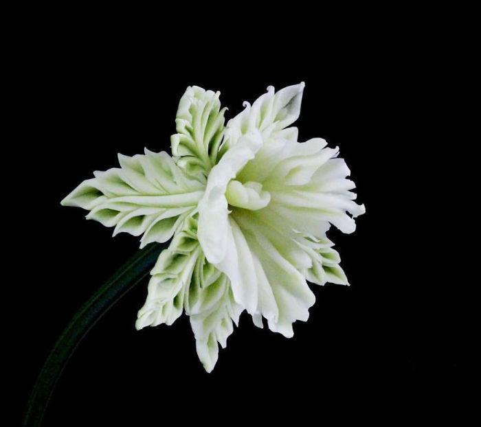 Белоснежная орхидея, вырезанная из овощей.