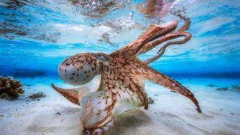Красоты подводного мира_01