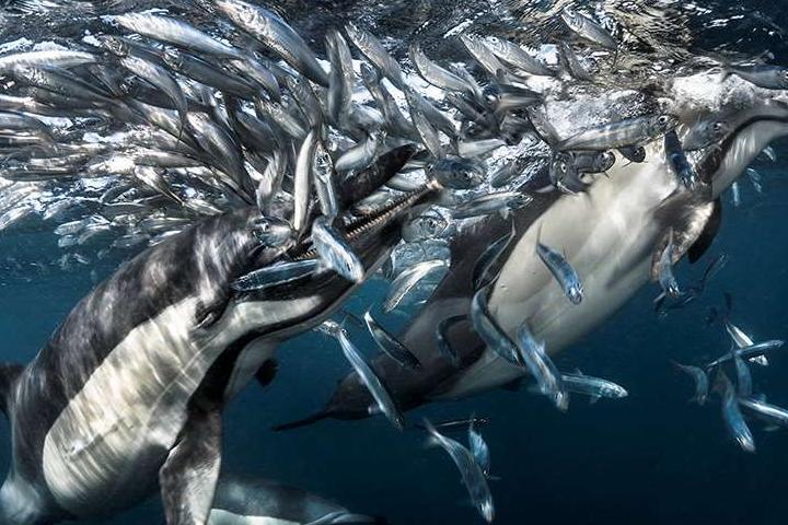 Красоты подводного мира_03