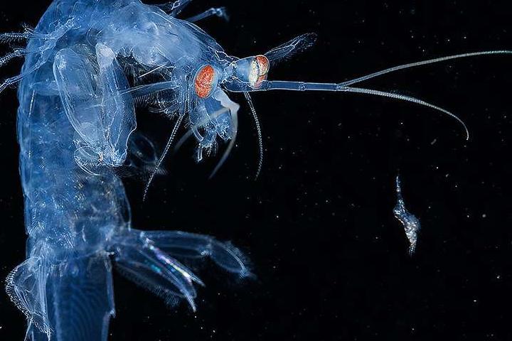 Красоты подводного мира_05