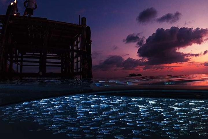 Красоты подводного мира_06
