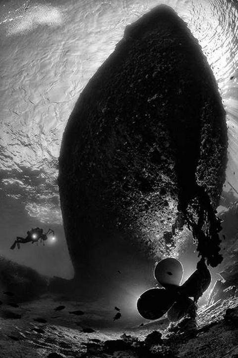 Красоты подводного мира_09