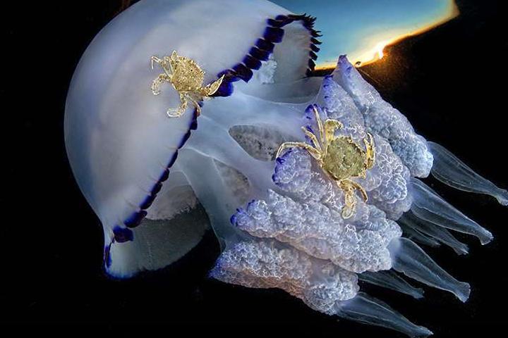Красоты подводного мира_10