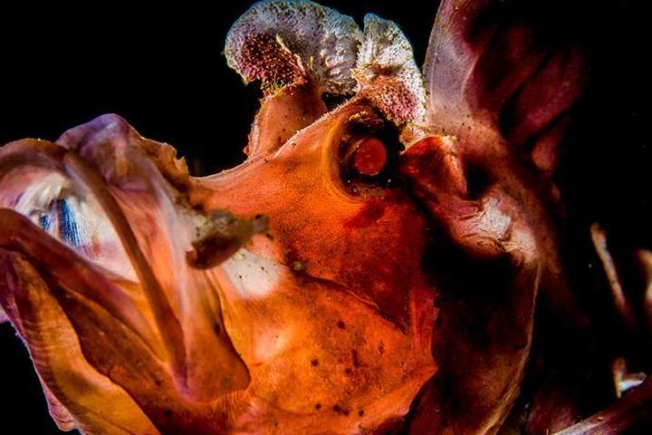 Красоты подводного мира_15