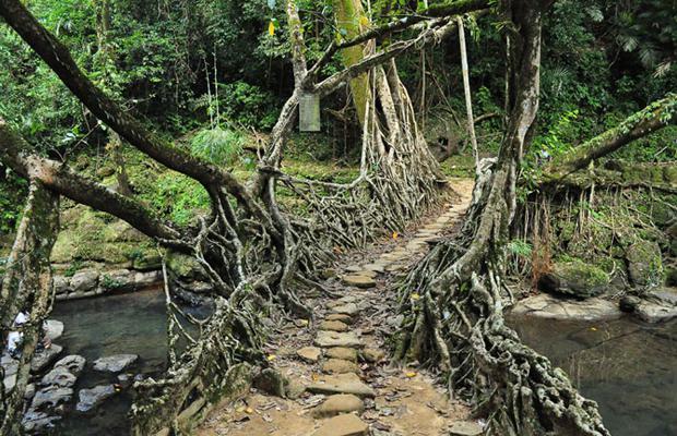 Живые мосты в городке Черапунджи, Индия