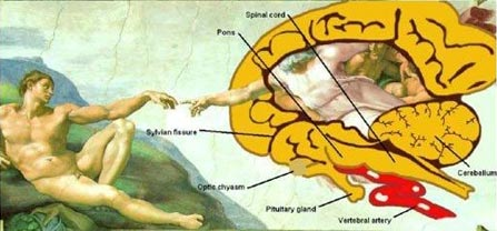 «Сотворение Адама»: божественное происхождение разума