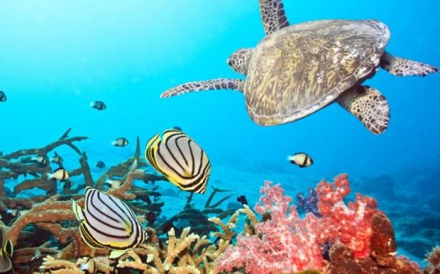 Мир кораллов 04