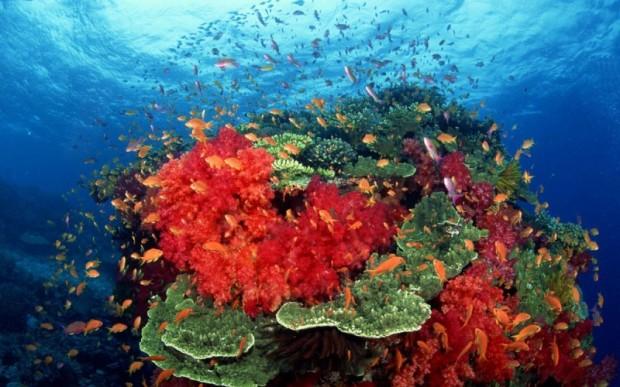 Мир кораллов 10