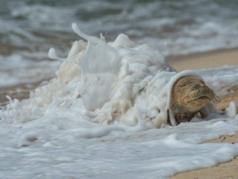 Заботливое море