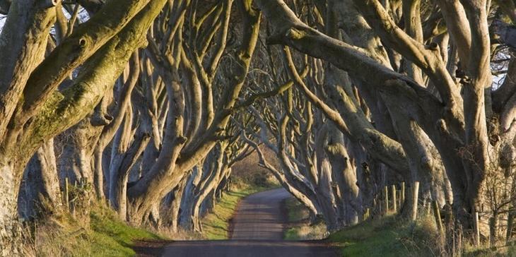 Темная аллея, Графство Антрим, Северная Ирландия