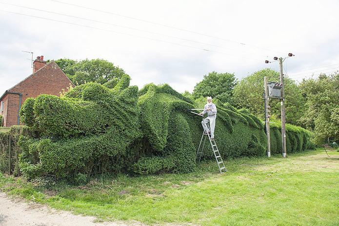 Британский садовник выращивает во дворе дракона