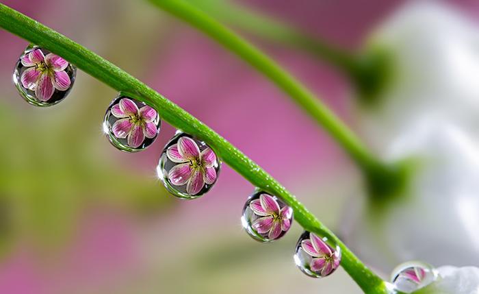 Цветы в каплях