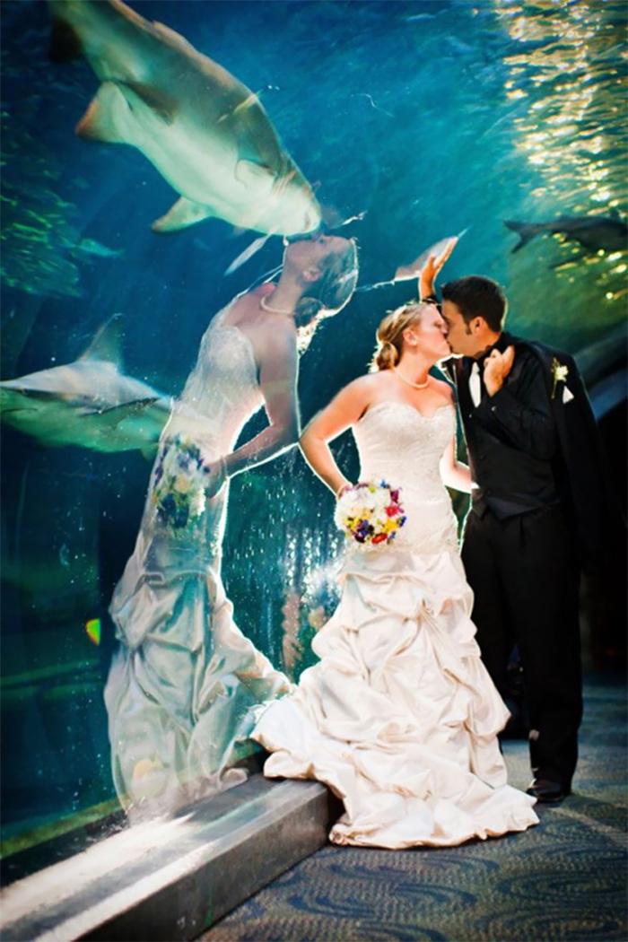 Поцелуй с акулой
