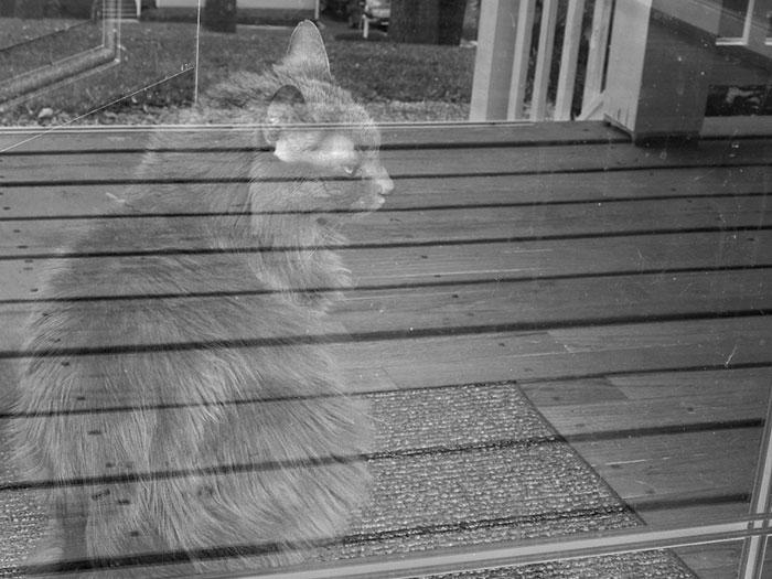 Призрачный кот