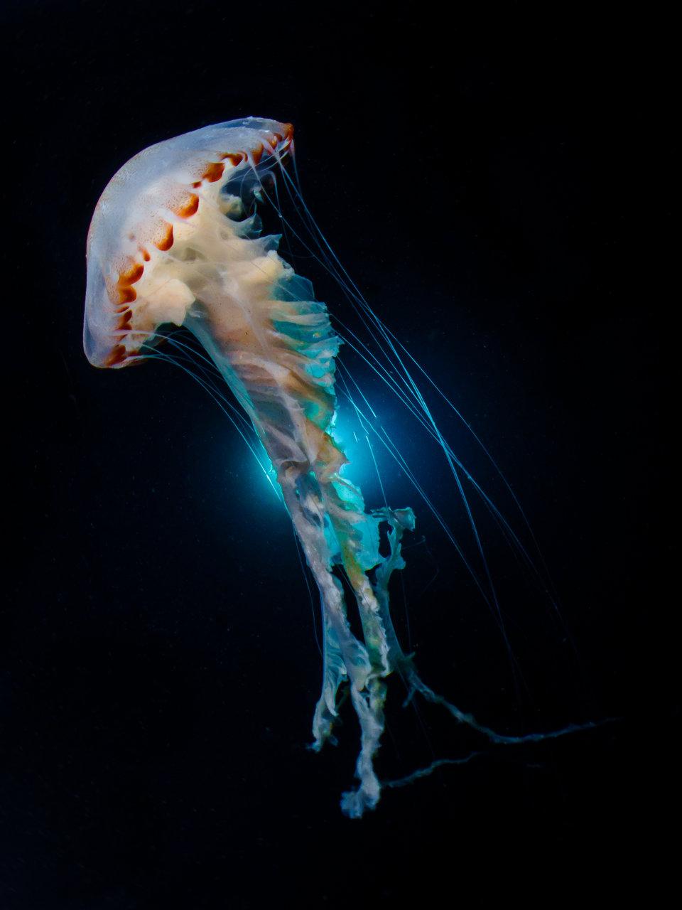 «Танцующие медузы», Мелоди Чуанг - Северо-восточное побережье, Тайвань