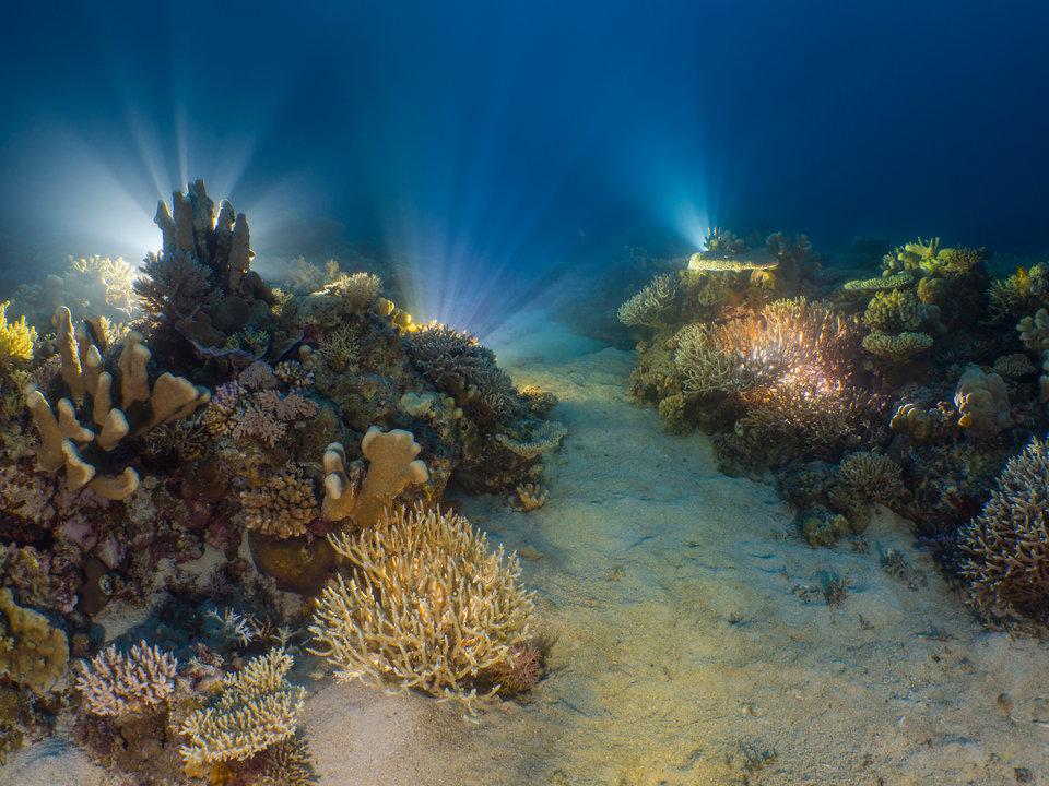 «Светящийся риф», Алекс Линдблум - Северный национальный парк Комодо, Индонезия
