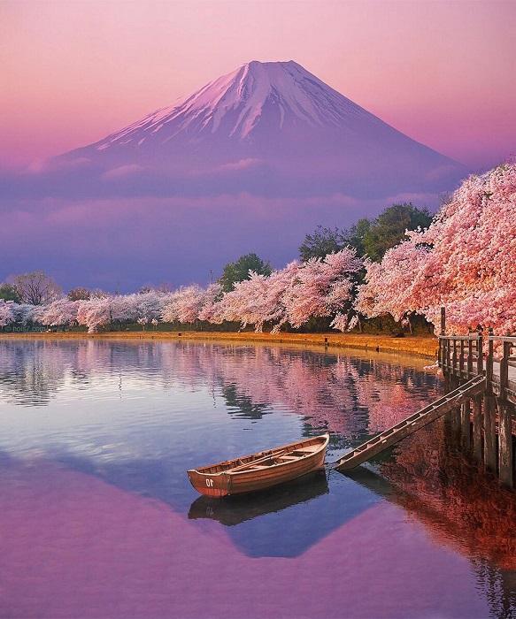 Цветущая вишня с пьяными ароматами так и манит в Страну восходящего солнца.