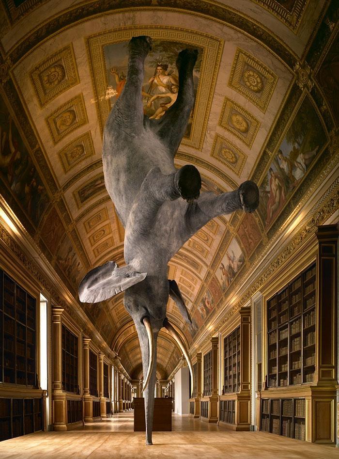 «Особенности гравитации для слона», Дэниел Фирман, Париж, Франция