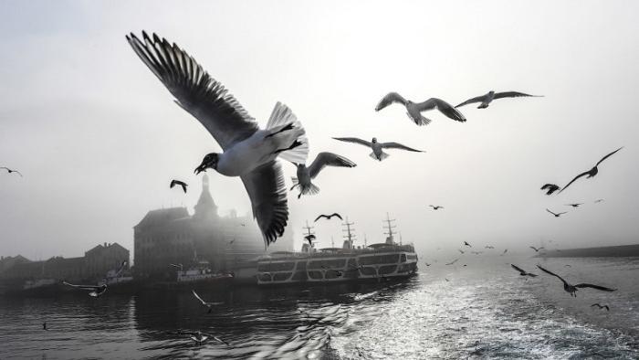 Чайки в волнах тумана