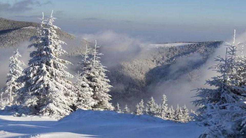 Прелесть зимы 08