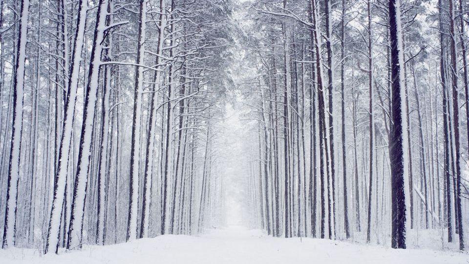 Прелесть зимы 15