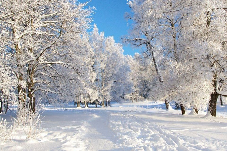 Прелесть зимы 18
