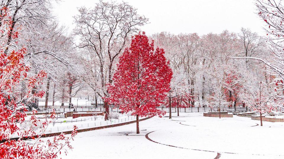 Прелесть зимы 19