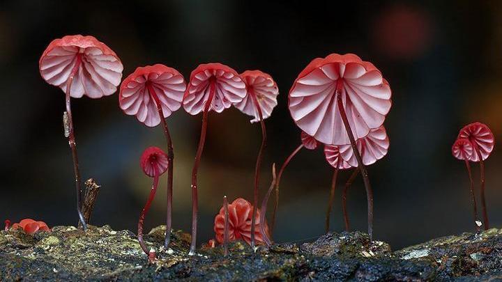 Самые красивые и необычные грибы 03
