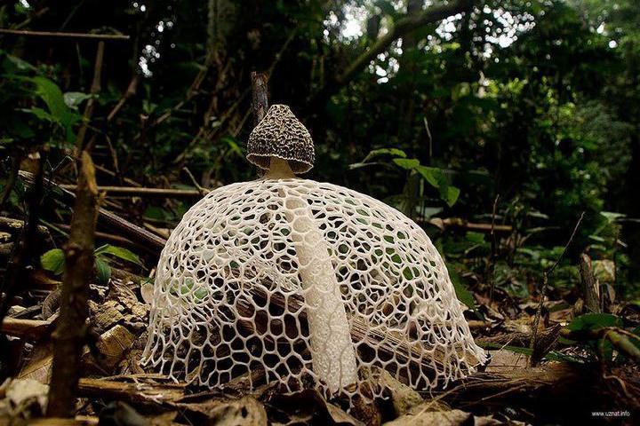 Самые красивые и необычные грибы 05