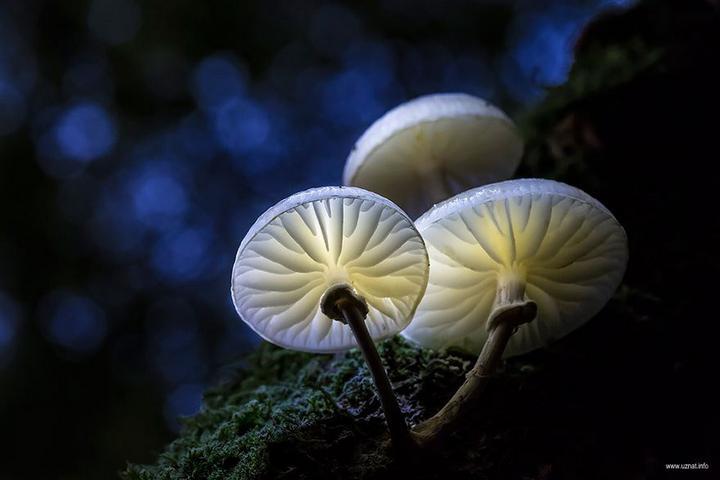Самые красивые и необычные грибы 09