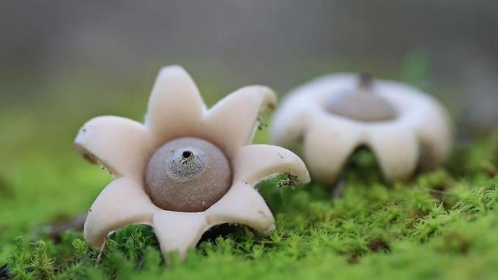 Самые красивые и необычные грибы 15