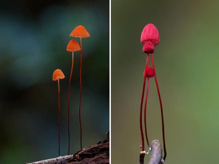 Самые красивые и необычные грибы 28