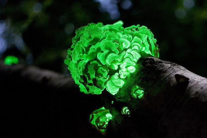 Самые красивые и необычные грибы 29