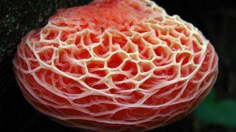 Самые красивые и необычные грибы 30