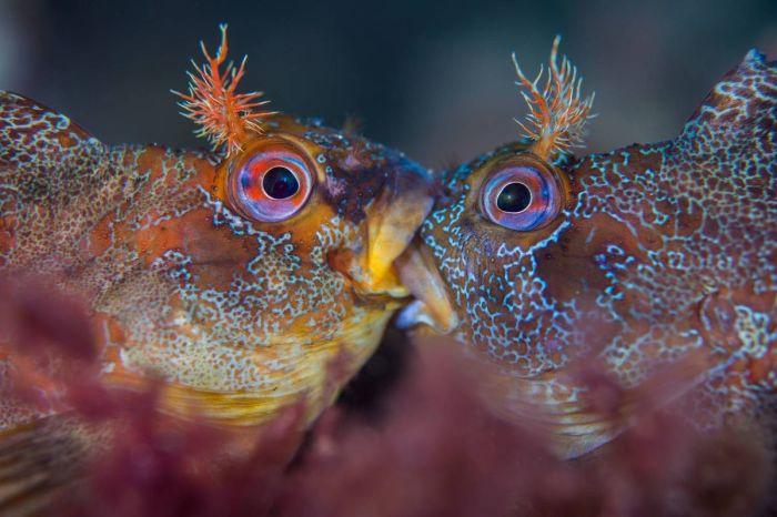 Схватка морских собачек. Автор: Хенли Спирс (Великобритания).
