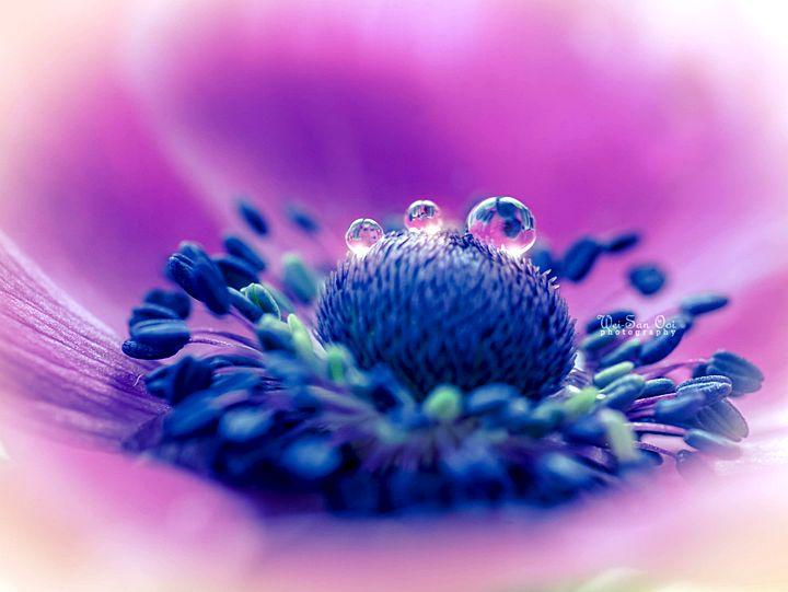 Очаровательные и вдохновляющие цветочные фотографи465
