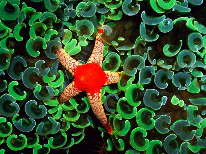Узоры природы-фотографии морских звезд 01