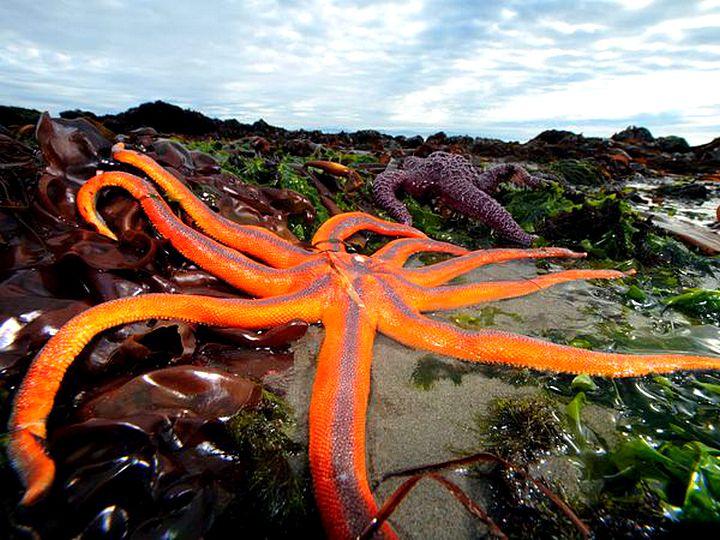 Узоры природы-фотографии морских звезд 03