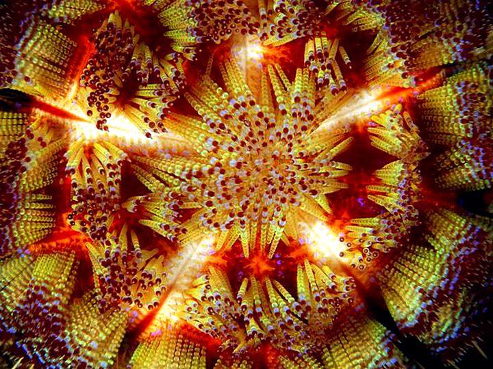 Узоры природы-фотографии морских звезд 07
