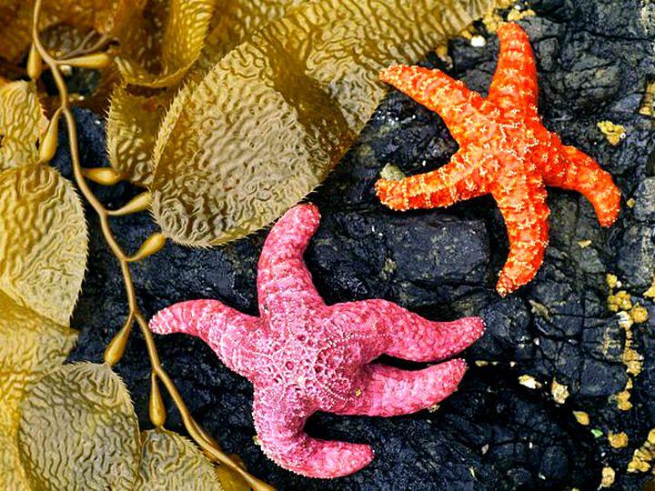 Узоры природы-фотографии морских звезд 10