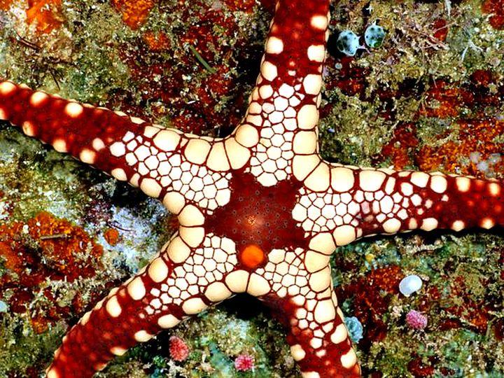 Узоры природы-фотографии морских звезд 11