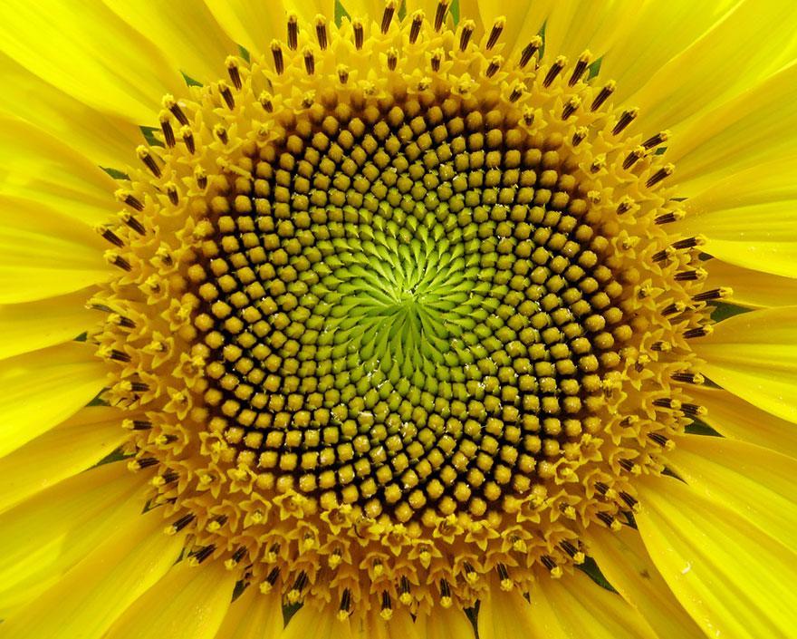 Геометрия в природе: растения с идеальной гармонией и симметрией