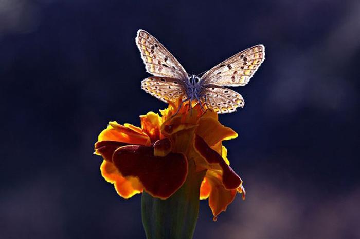 Цветок и бабочка.