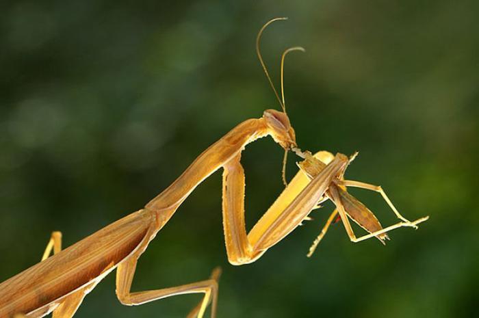 Макромир насекомых.